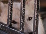wolven in gevangenis